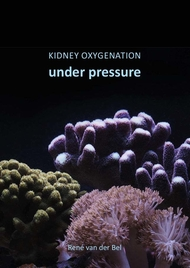 Kidney oxygenation under pressure